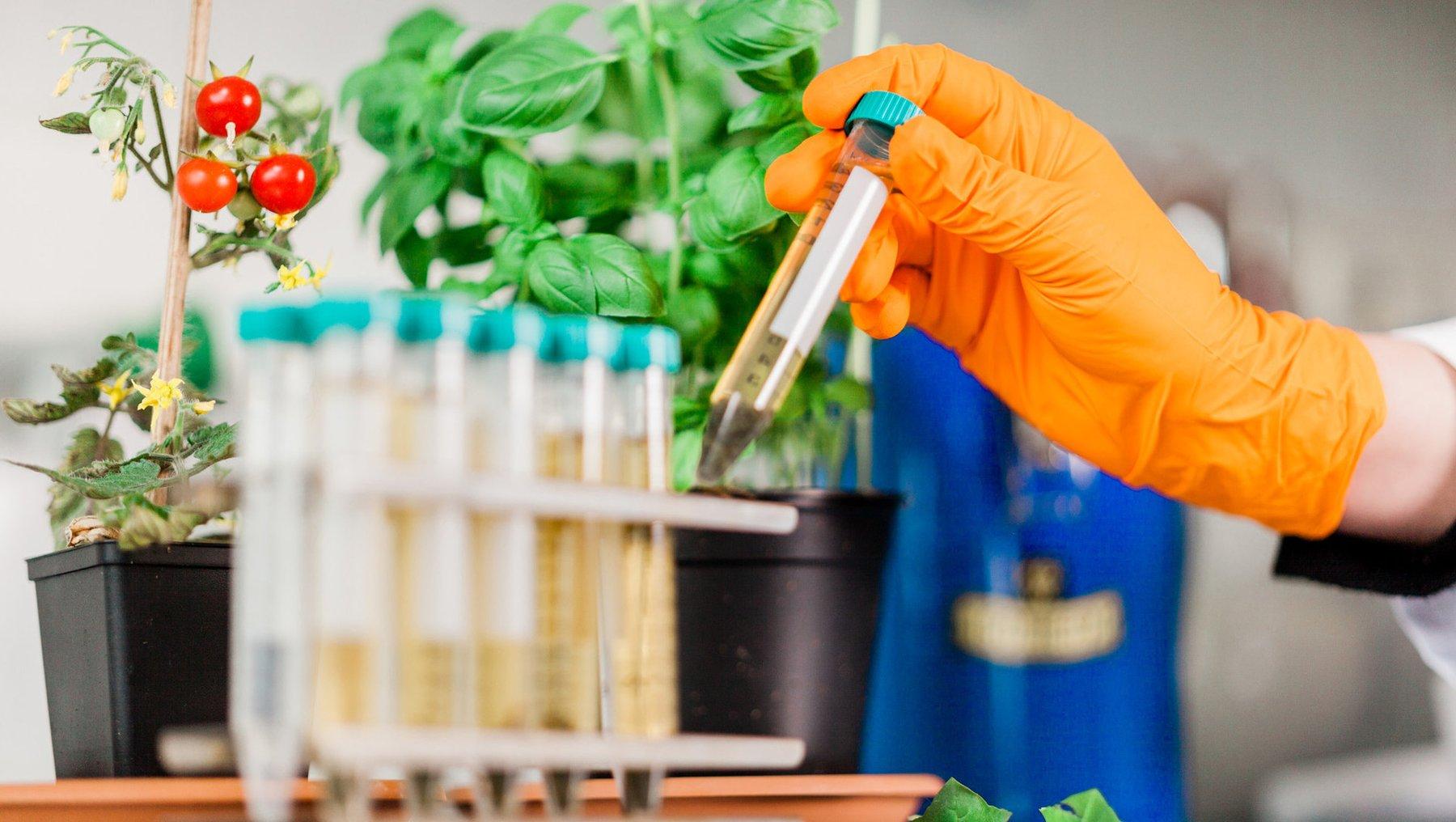 invivo Versuche zur Testung pflanzl. Extrakte